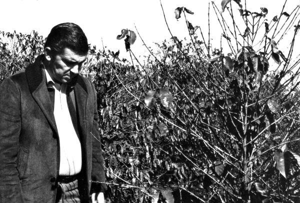 Arquivo MIS/PR / Jaime Canet sentiu na pele a Geada Negra, como governador e como produtor de café